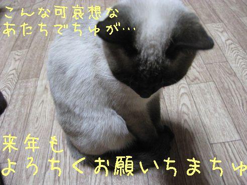 IMG_0408にゃん