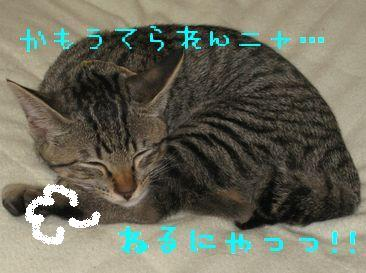 IMG_0672727.jpg