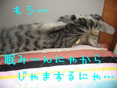 IMG_0713.jpg