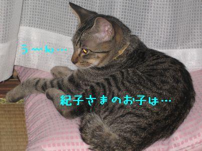 IMG_08466.jpg