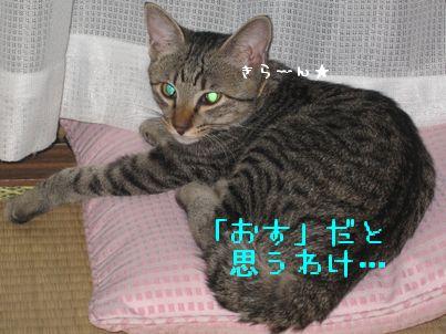 IMG_08488.jpg