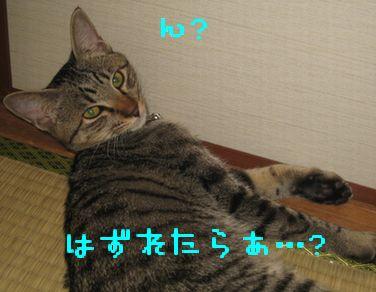 IMG_0858.jpg