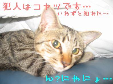 態度デカくね!?!?