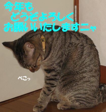 IMG_2208nyann.jpg