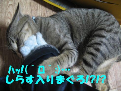 IMG_3745.jpg