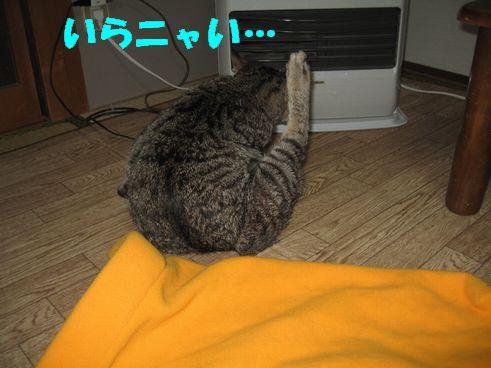IMG_4512.jpg