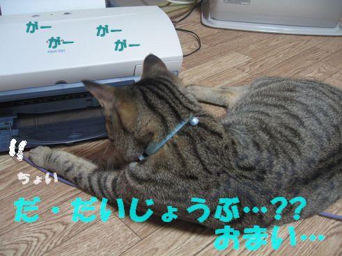 IMG_4565.jpg