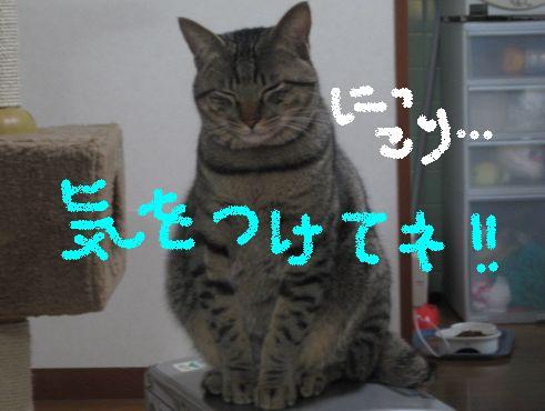 IMG_4609nyann.jpg