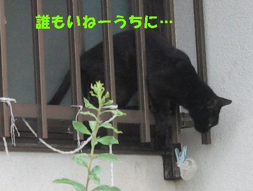IMG_8155.jpg