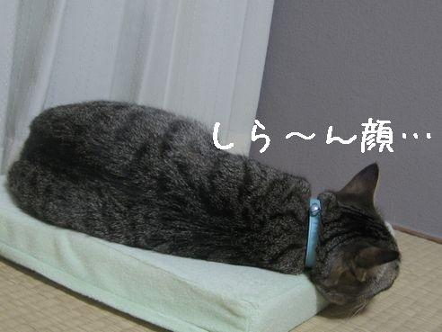 IMG_8778.jpg