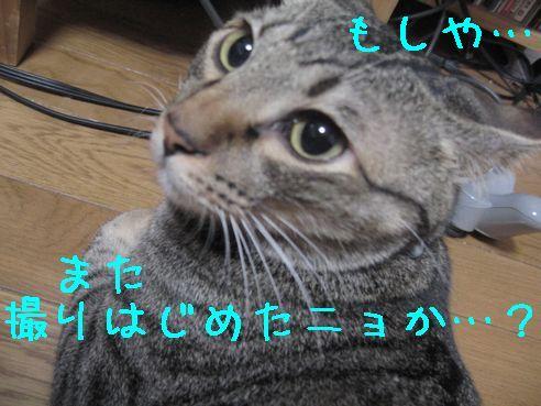 IMG_92477.jpg
