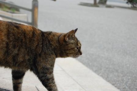 サビ猫登場
