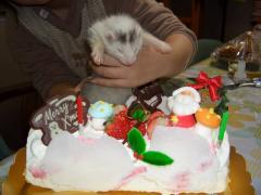 はじめてのケーキ