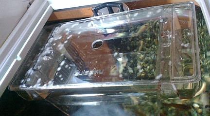 稚魚飼育箱①