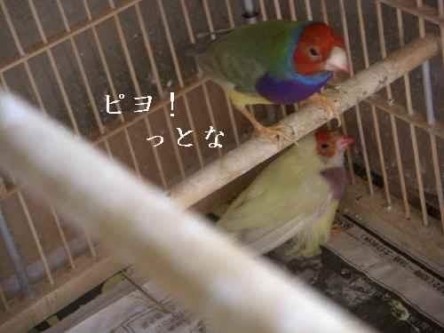 2007-12-9-.jpg