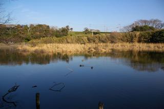 20080105 小松ヶ池