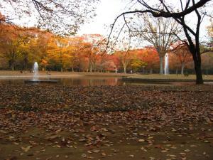 秋の公園です