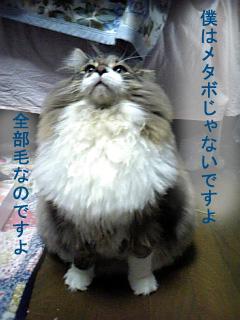 達磨さん体系