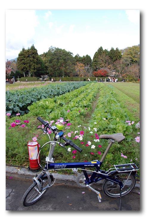2008akikyoto-1.jpg