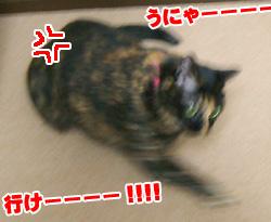 20071114_1.jpg