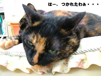 20071114_2.jpg