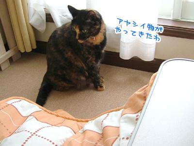 20071128_6.jpg