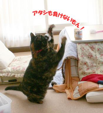 20080104_6.jpg