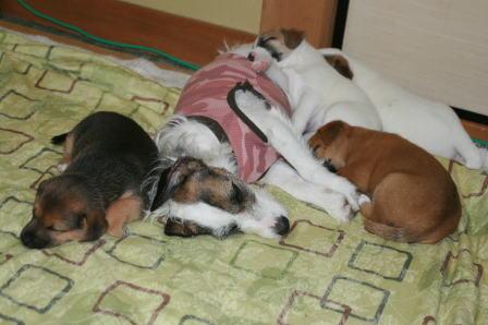 親子で眠る5ワン