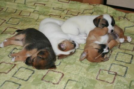 眠る4ワン子たち