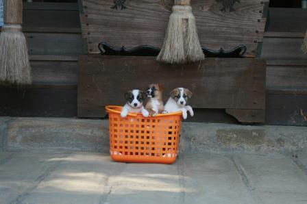 日吉神社での4ワンたち(2)