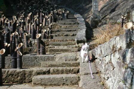 愛染堂への階段を登るもも