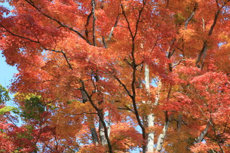 大手門跡付近の紅葉