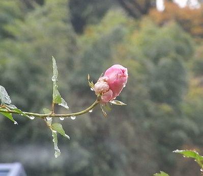 冬のマリネット