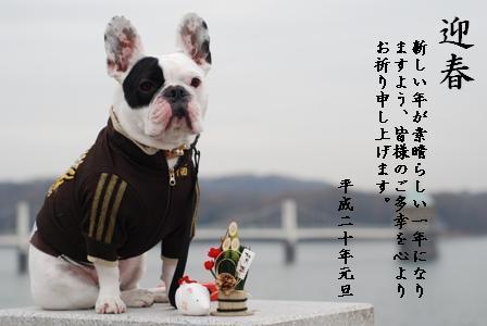 桃太郎侍を宜しくお願いします。