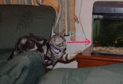 熱帯魚観賞1