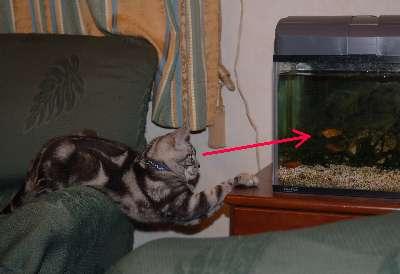熱帯魚観賞2