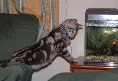 熱帯魚鑑賞3