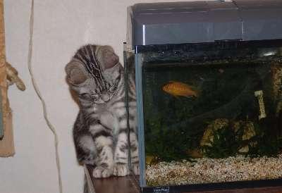 熱帯魚観賞4