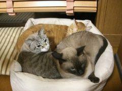 3匹ベッド