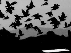 night birds music