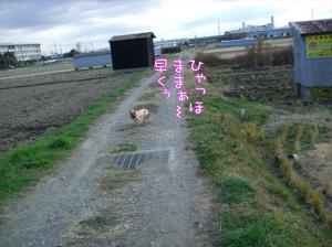 初田んぼぉ~♪