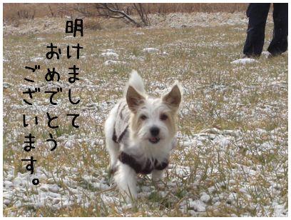 2008_01010021.jpg