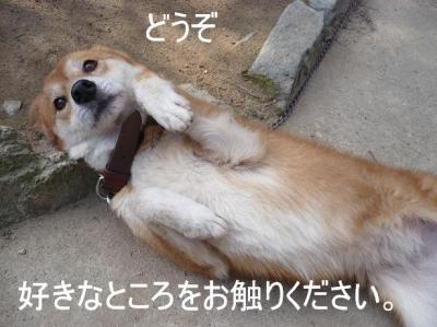 コピー ~ 次郎