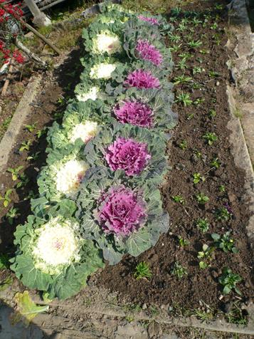 ハウス前花壇12月