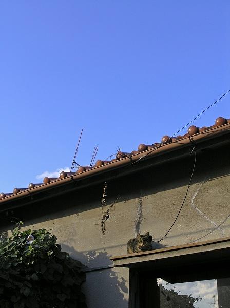20080104_039
