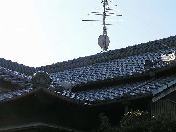 20080106_036