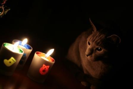 猫とキャンドル
