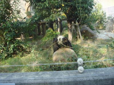 2007.11.10 パンダ