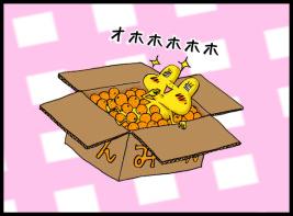 みかんの箱とかえる1