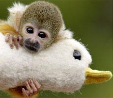 monkeyduck.jpg